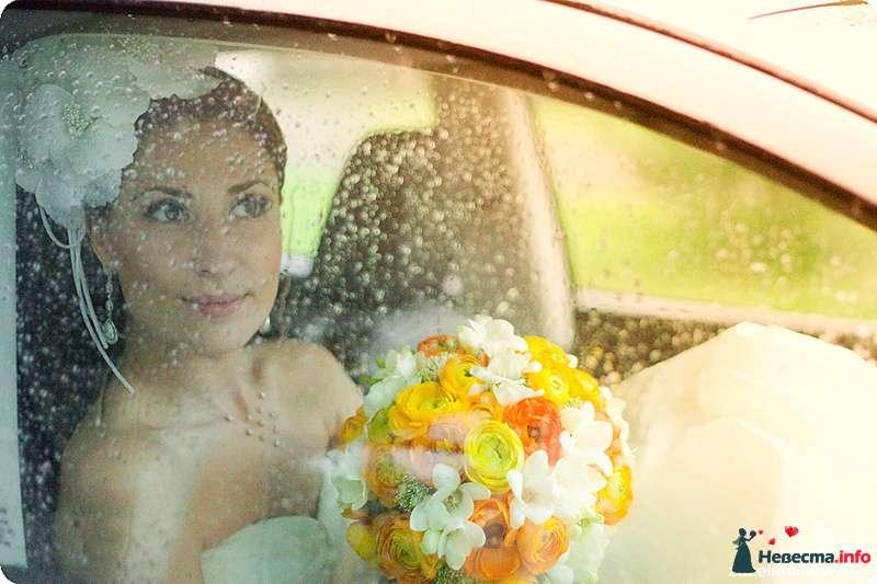 Фото 108558 в коллекции My lemon&camomile wedding - Shuga