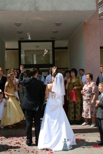 Фото 9594 в коллекции Свадебные фотографии