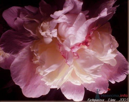 Фото 15146 в коллекции Мои фотографии - Катрин