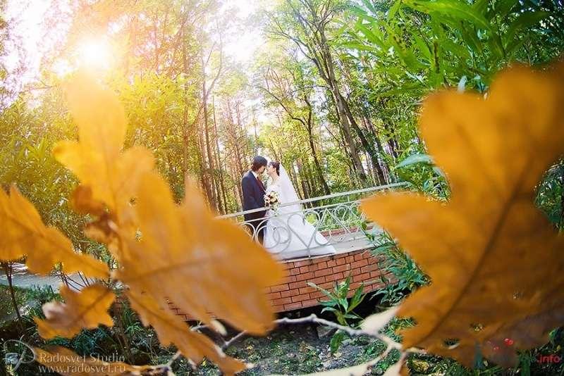 Фото 57301 в коллекции Свадебное фото - Фотограф Радосвет Лапин
