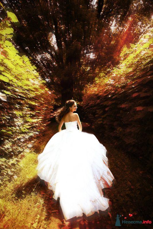 Фото 134770 в коллекции Свадебная подборка - Авторская видеография Сергея Дорохина(Dvcamstudio)