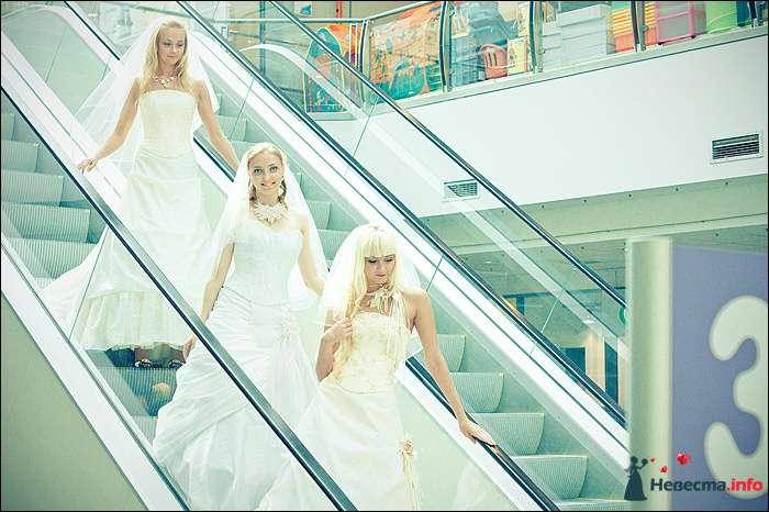 Фото 107765 в коллекции Первая выставка Свадебной фотографии в Перми - Фотограф Швецов Николай
