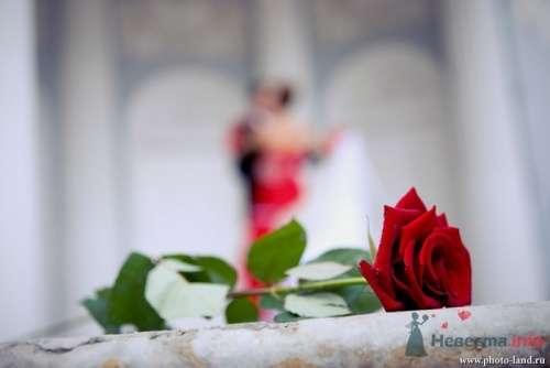 Фото 11052 в коллекции Свадьба Виктории и Сергея - Свадебные фотоистории от Андрея Егорова