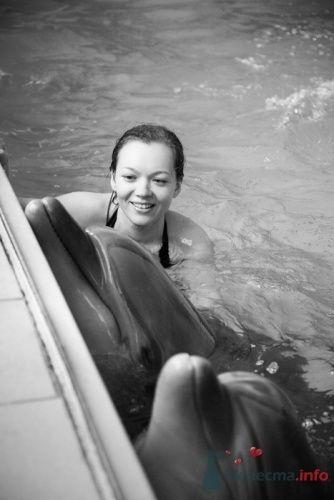 фотоистория с дельфинами, Елена и Андрей - фото 13292 Свадебные фотоистории от Андрея Егорова