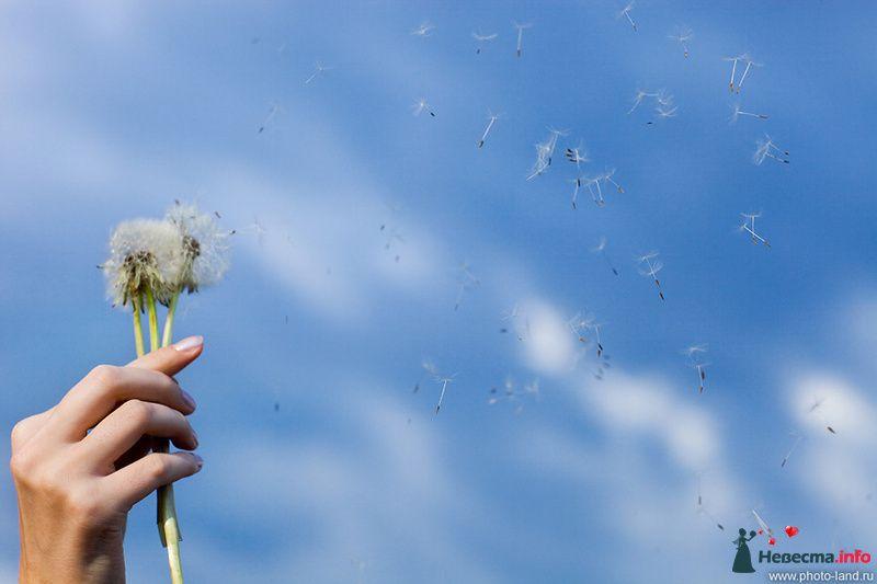 Фото 108189 в коллекции Предсвадебное Лавстори Аллы и Паши - Свадебные фотоистории от Андрея Егорова