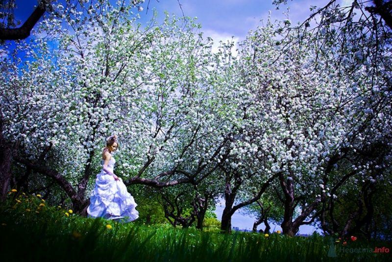 Фото 69837 в коллекции Свадебные фотографии - Свадебный фотограф Сергей Несин