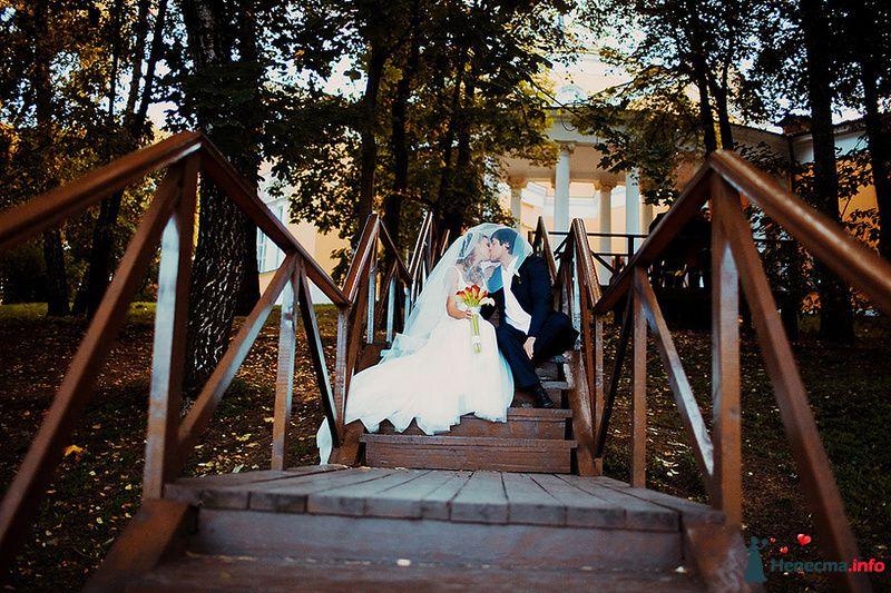 Жених и невеста целуются сидя на ступеньках в парке