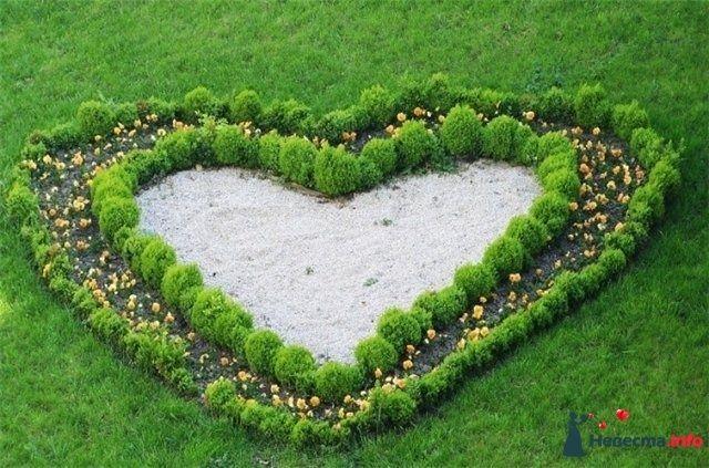 Сердце - фото 88568 Ольгица