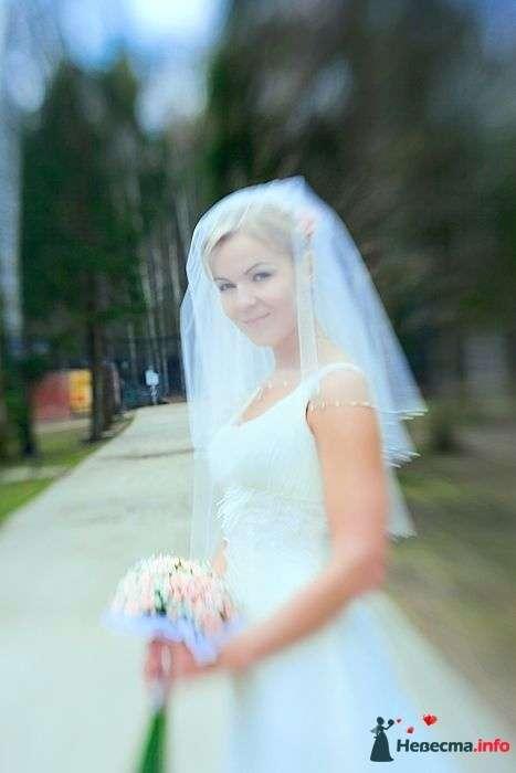Фото 101479 в коллекции Мои фотографии - hayate