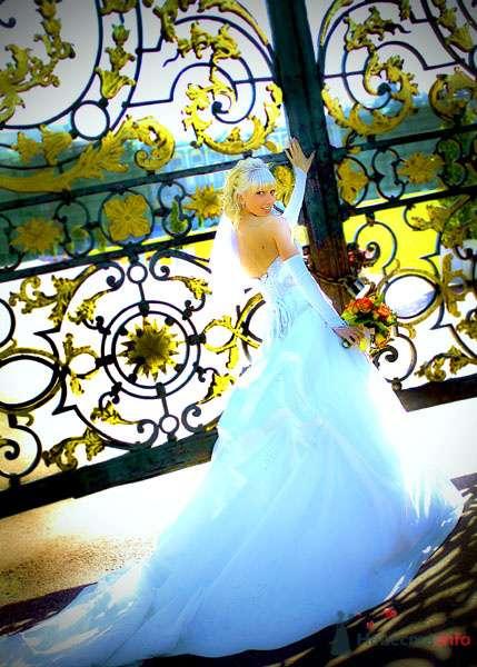 Фото 74309 в коллекции Мои фотографии - svetlanaknut