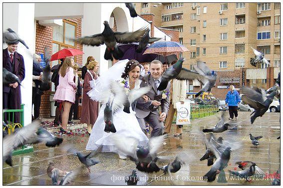 Фото 74910 в коллекции свадебные фото - Фотограф Денис Соколов
