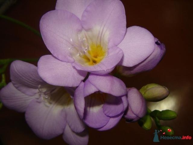 Фото 116552 в коллекции Мои фотографии - Катерина!