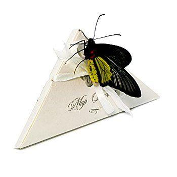Бабочки в коробке подарок цена волгоград 48