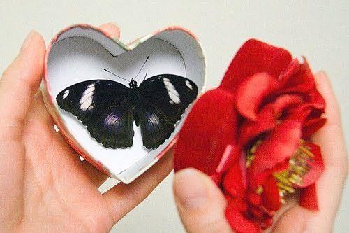 Бабочки в коробке подарок цена волгоград 53