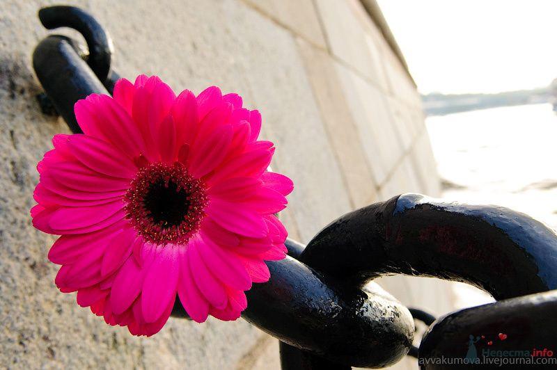 Фото 79785 в коллекции Love story - Свадебный фотограф Мария Аввакумова