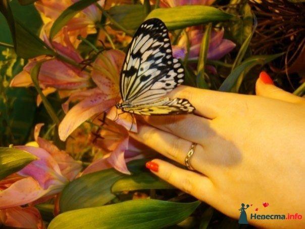 Фото 122124 в коллекции Love Story - Oliti
