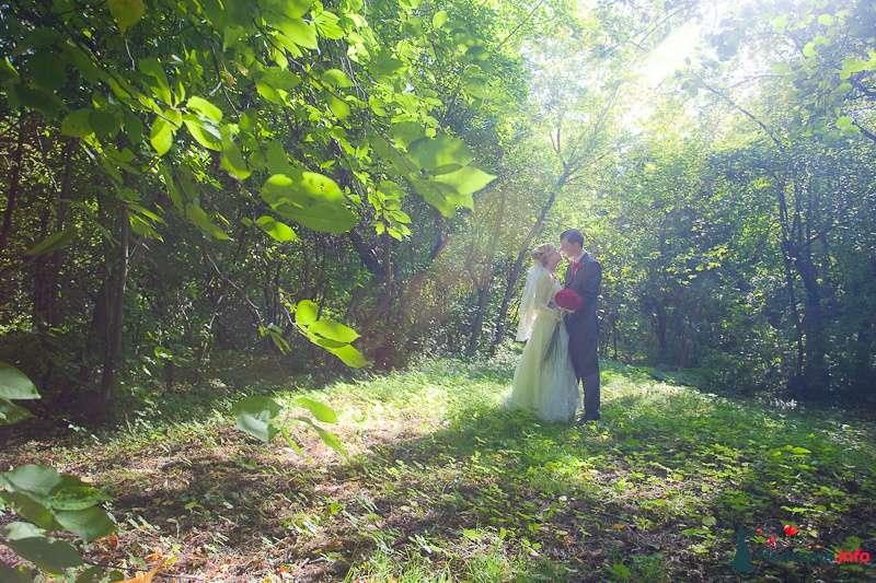 Фото 94365 в коллекции Мгновения счастья - Light Photo Studio - фотограф