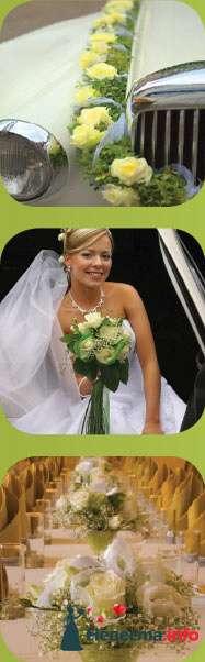 Фото 82132 в коллекции Мои фотографии - Свадебный распорядитель. Яна