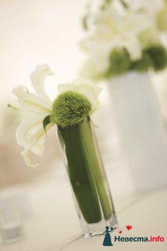 Фото 99603 в коллекции Флористика - Свадебный распорядитель. Яна