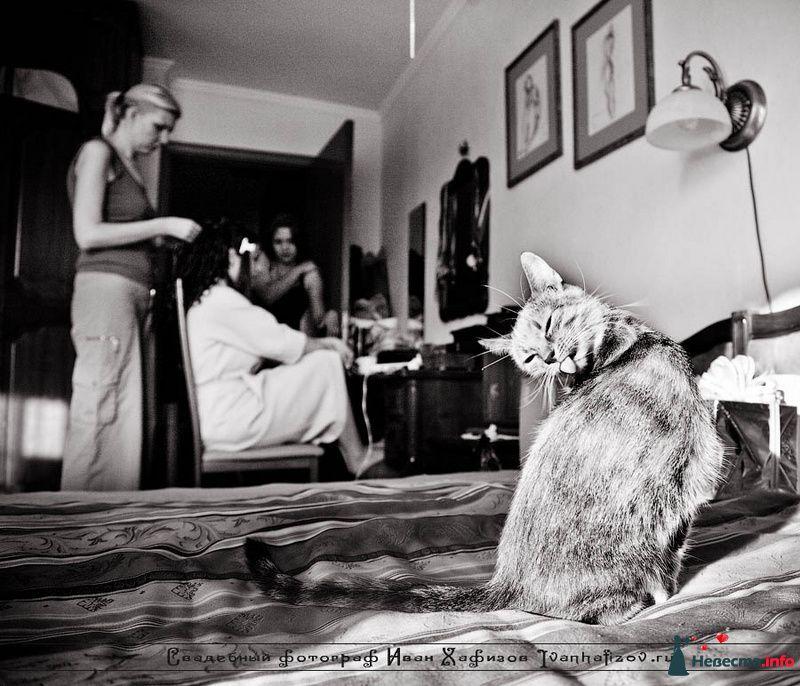Фото 93244 в коллекции Репортажные свадебные фотографии - Ваш свадебный фотограф Иван Хафизов