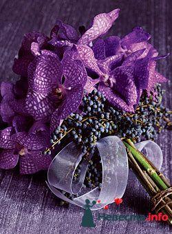 Фото 98887 в коллекции Мои фотографии
