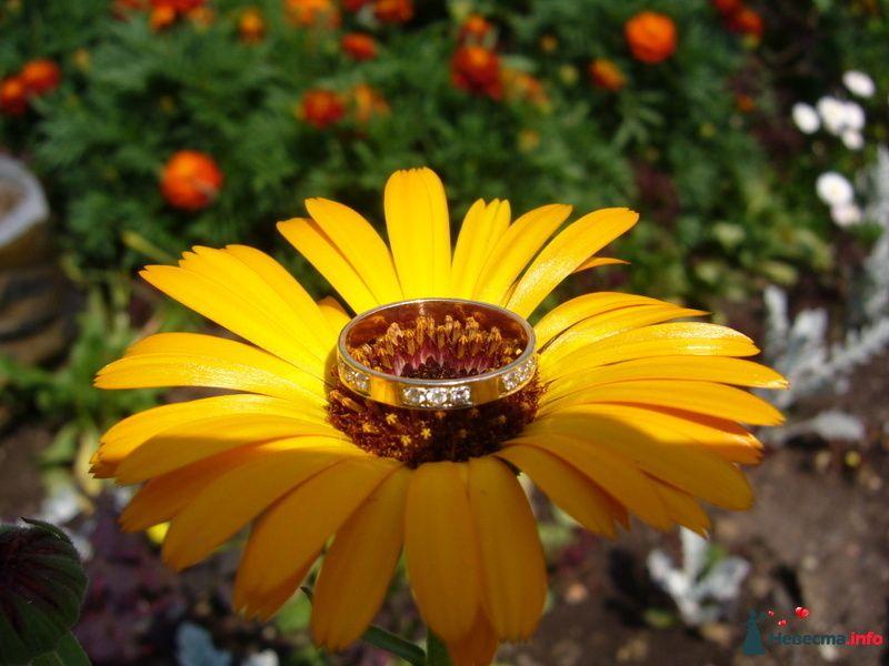 Моё кольцо - фото 126313 БелИрина
