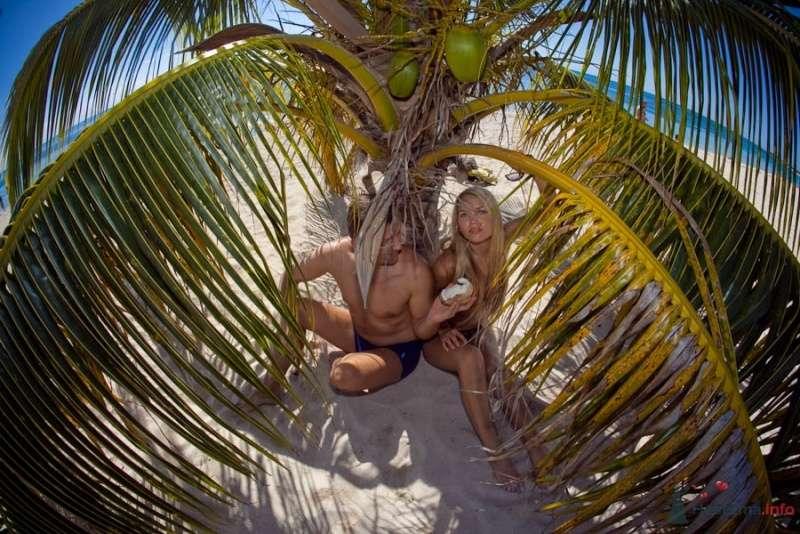 Сигары и кокосы - фото 66640 Фотограф Елена Зотова