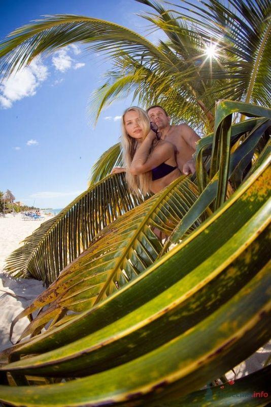 Пальмовые одеяла - фото 66641 Фотограф Елена Зотова