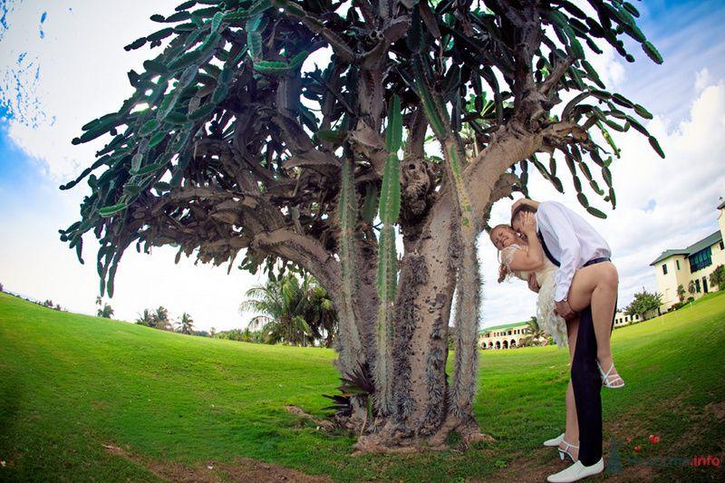 Жених целует невесту возле большого дерева в парке - фото 71469 Фотограф Елена Зотова