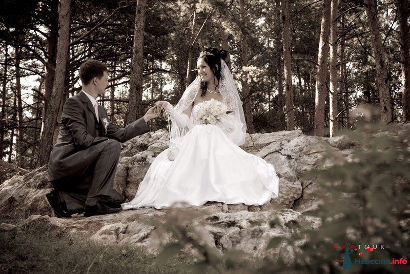 Фото 87355 в коллекции Amatour (свадебное) - Amatour