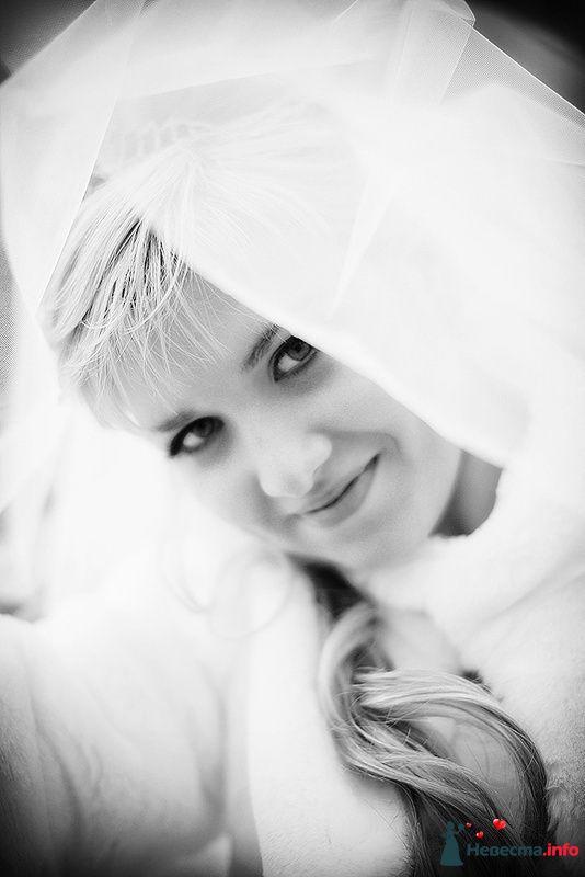 **** - фото 129216 Дмитрий Коробкин. Свадебный фотограф.