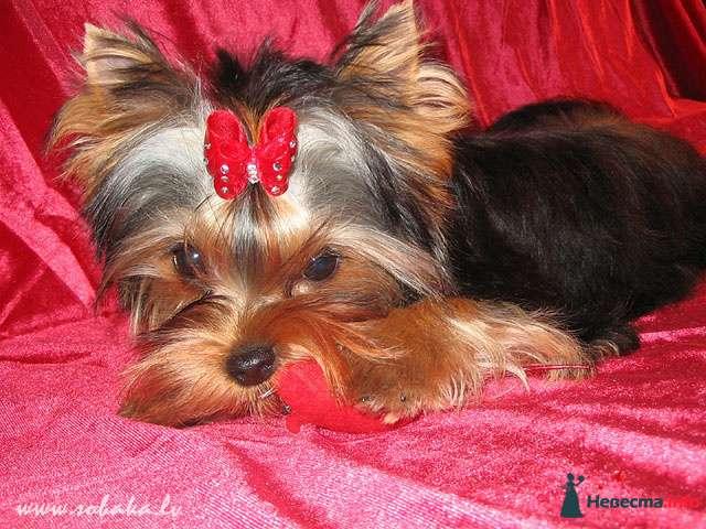 Фото 89996 в коллекции Мои фотографии - Лизавета