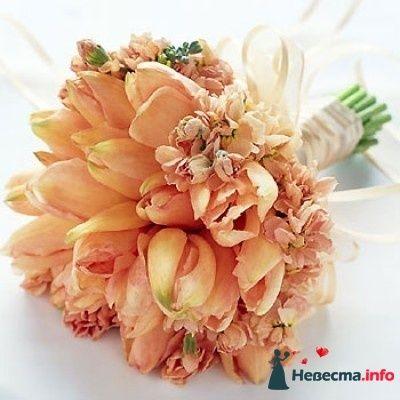 тюльпаны - фото 89878 Рыжая-бесстыжая