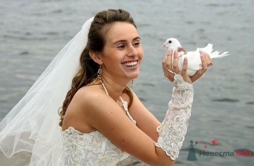 Птица счастья - фото 6405 Loyko
