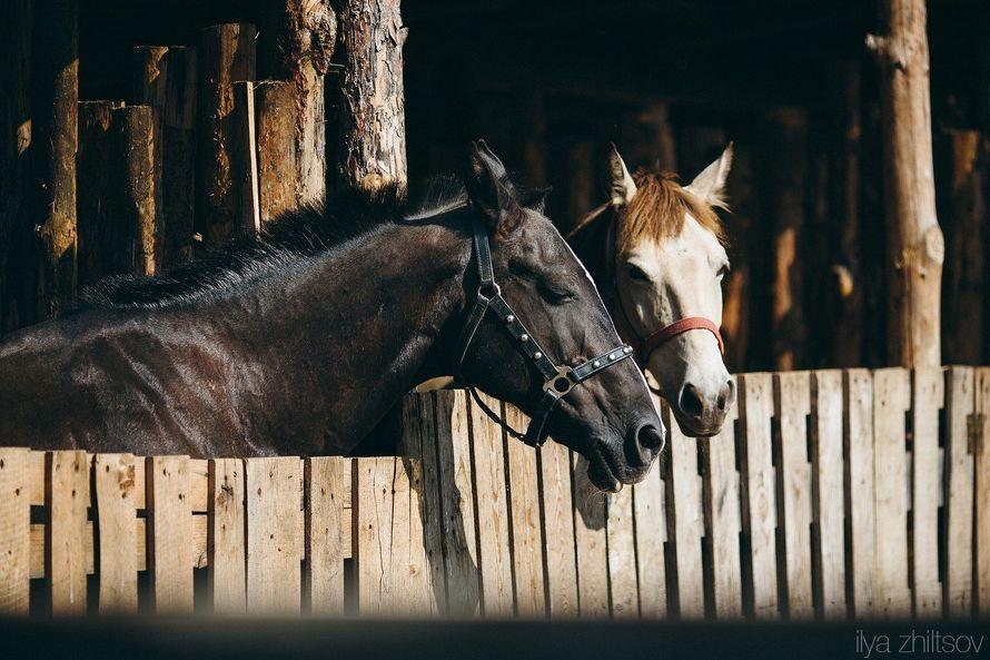 Фото 4817449 в коллекции Женя + Маша (2014) - Фотограф Жильцов Илья