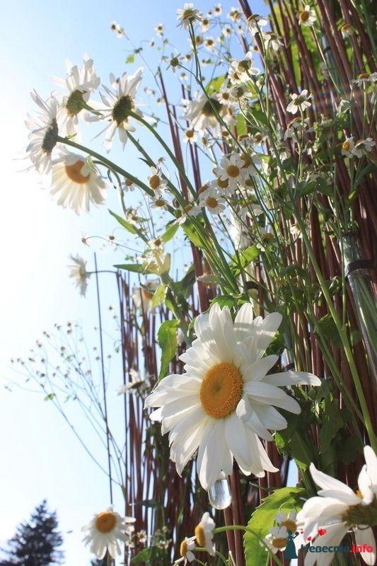 ромашковая свадьба - фото 107375 Флорист-декоратор Янина Венгерова
