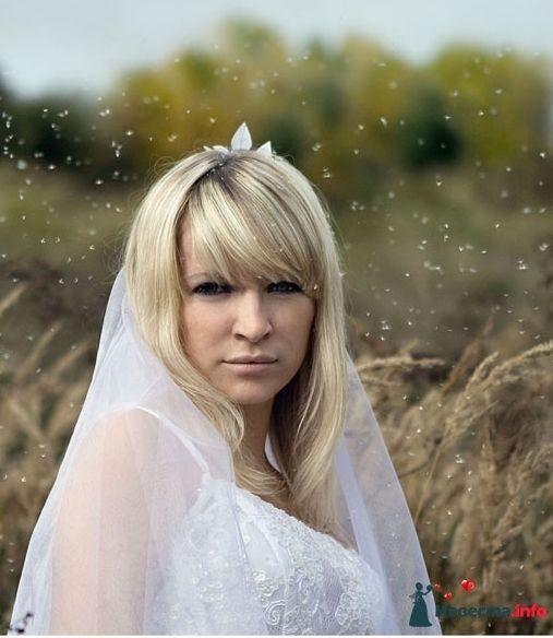 Фото 97446 в коллекции Свадьба