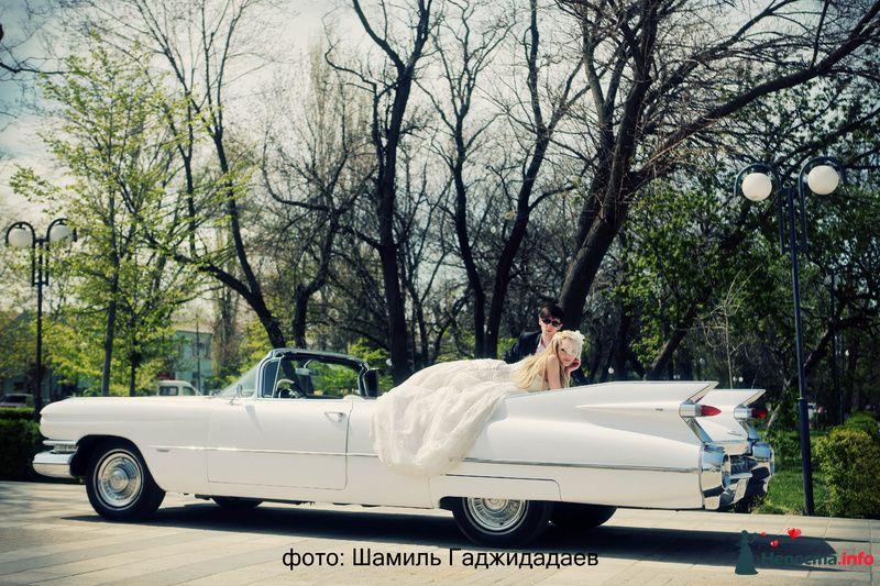 """Фото 97876 в коллекции Свадебное фото - Компания """"КАРАВАН-СЕРВИС"""""""