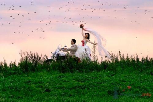 like a birds - фото 8153 Фотограф Олег Ванилар