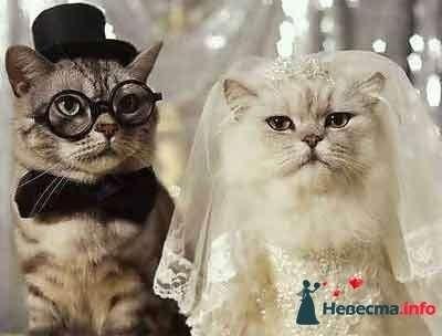 Фото 103584 в коллекции Невесты бывают разными - Madlen_