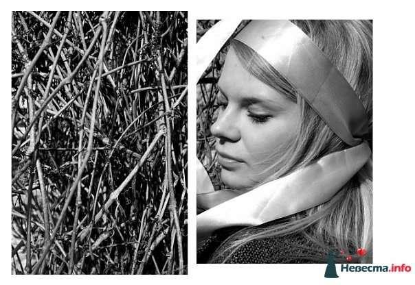 Фото 105408 в коллекции Пример моих работ - Анастасия Новикова - фотограф