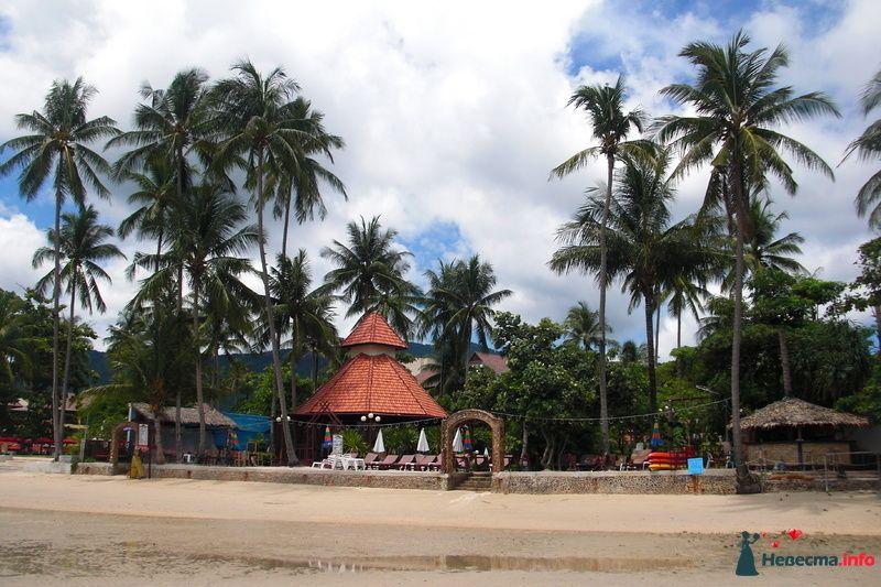 пляж , отлив - фото 107025 Клёна