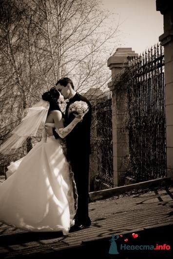Фото 106863 в коллекции Свадебная фотография - Игорь Моисеев