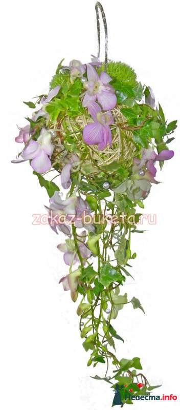 Орхидеи - фото 124706 Zmeika