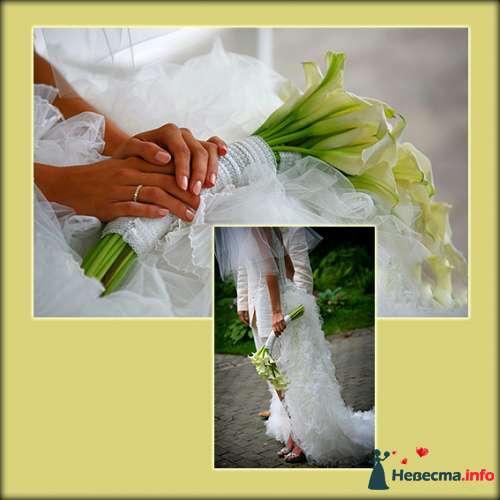 Фото 112338 в коллекции Мои фотографии - Невеста01