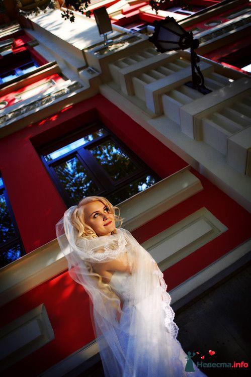 """Фото 111261 в коллекции Мои фотографии - Свадебное агентство """"Свадьба твоей мечты"""""""