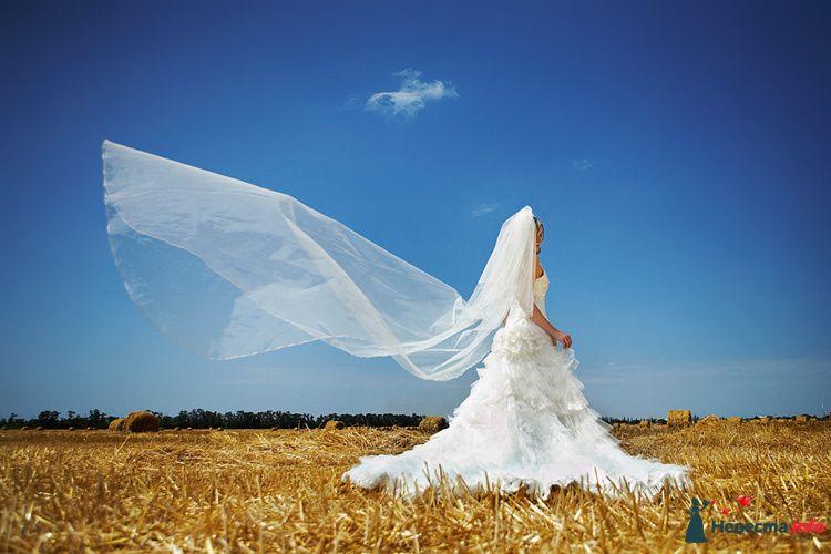 """Фото 111265 в коллекции Мои фотографии - Свадебное агентство """"Свадьба твоей мечты"""""""