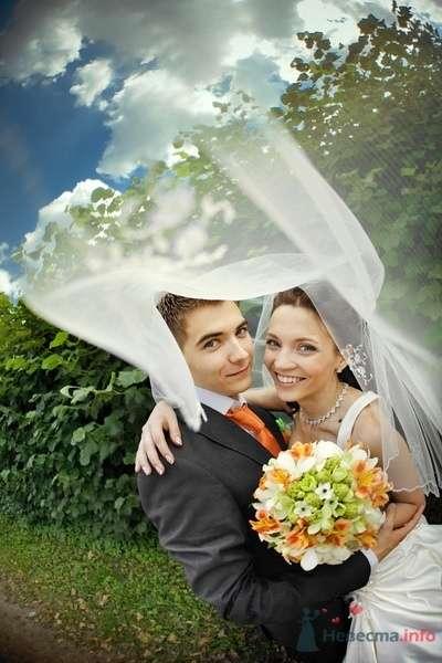 Заячья свадьба или Любовь-морковь и все такое_4 - фото 58282 dimina lapa