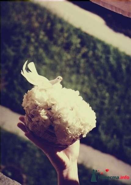 """мини-композиция """"Голубь Мира"""" - фото 121624 Мастерская цветочной феи - цветы"""