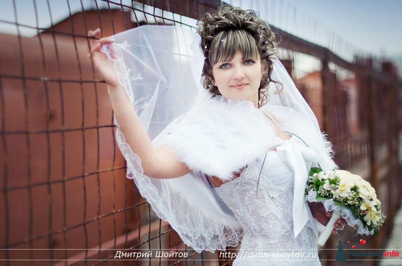 Фото 119718 в коллекции фотограф Дмитрий Шойтов